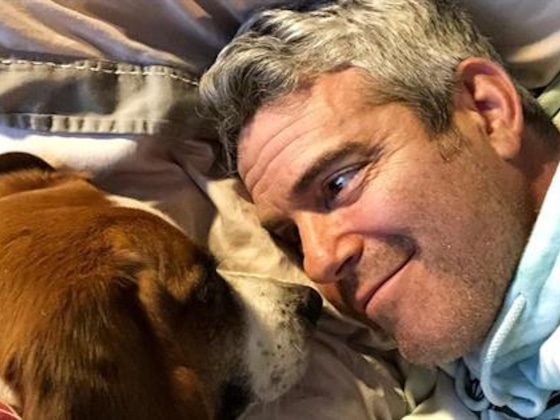 Andy Cohen Fires Back at
