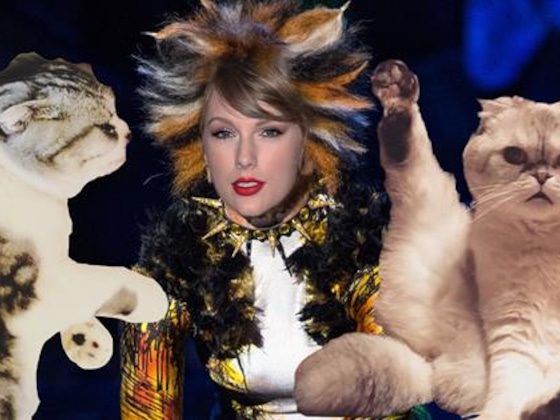 5 Skills Taylor Swift Can Learn From Her Cats for