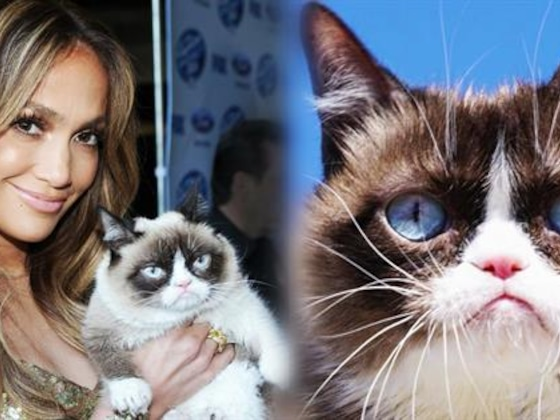 Remembering Grumpy Cat & All Her Celeb Friends