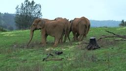 It List: California - A Canadian Elephant's Californian Retirement